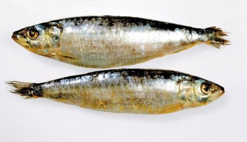 021006_sardinas